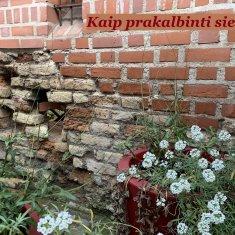 Vilniaus gotika arba kaip prakalbinti sienas